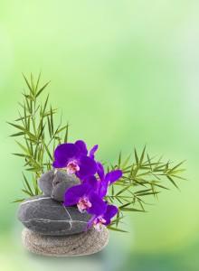 stone stack with flower; www.fengshui-schmidt.de.vu