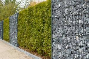 Zaun mit Hecke