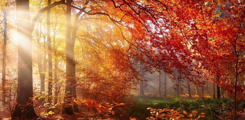 Herbst im Wald, mit Lichtstrahlen im Nebel und rotem Laub; www.fengshui-schmidt.de