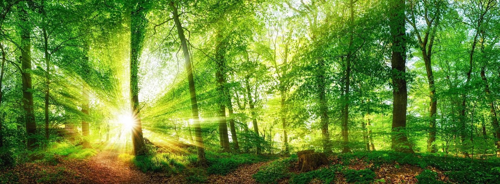 Wald Panorama mit durch Blätter leuchtenden Sonnenstrahlen; www.fengshui-schmidt.de